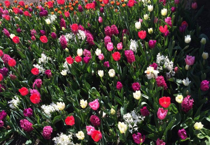 Schermafbeelding 2015-04-14 om 14.24.16