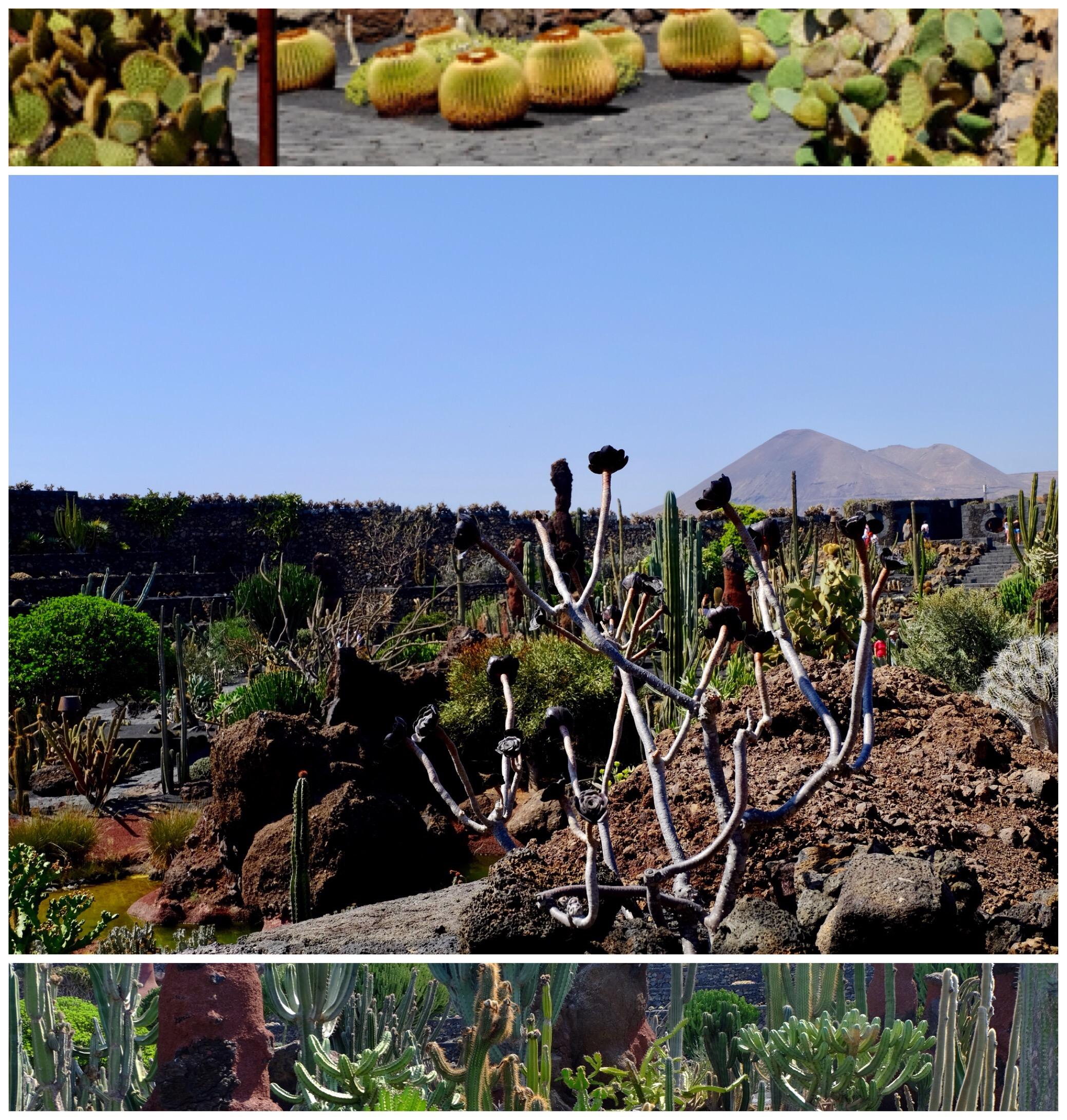 Visit Jardin de Cactus Lanzarote Springhill Stories
