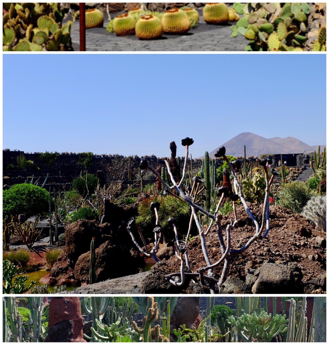 visit jardin de cactus lanzarote - Jardn De Cactus